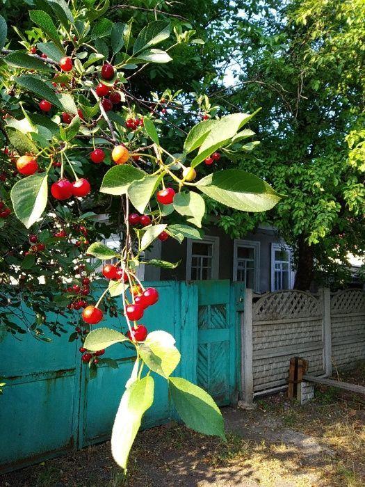 Продам дом, Холодная Балка, Макеевка.0713205114