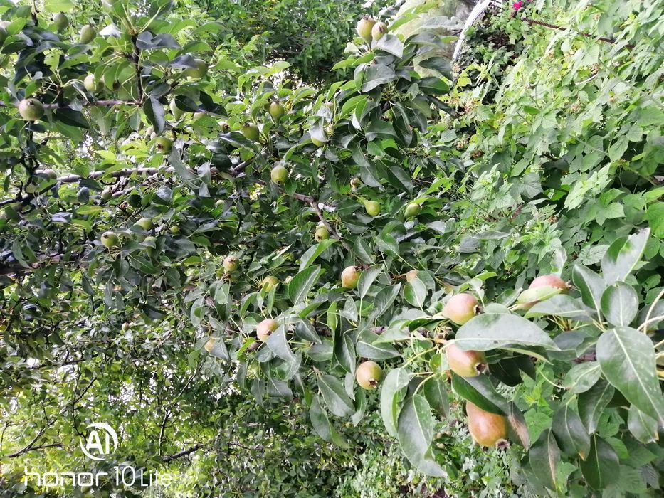 Продам дачу с фруктовыми деревьями и ягодными кустамиВОДА ОХРАНА